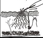 usuwanie blizn szczecin